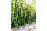 Cloud Forest Vegetation