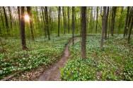 Trillium Woods