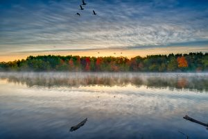 fall folliage misty morning canadian geese sunrise