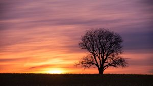 tree in field at sunrise landscape photography