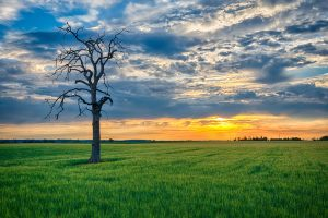 green field and lifeless tree sunrise landscape photography