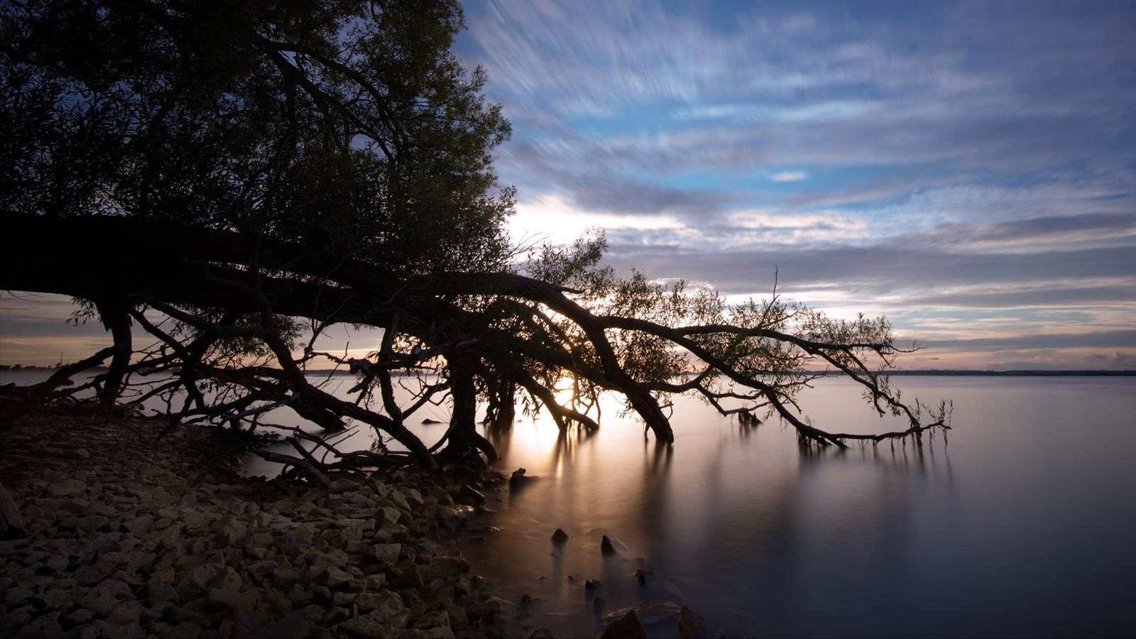 long exposure lake ontario tree in water sunrise