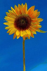 impressionistic sunflower