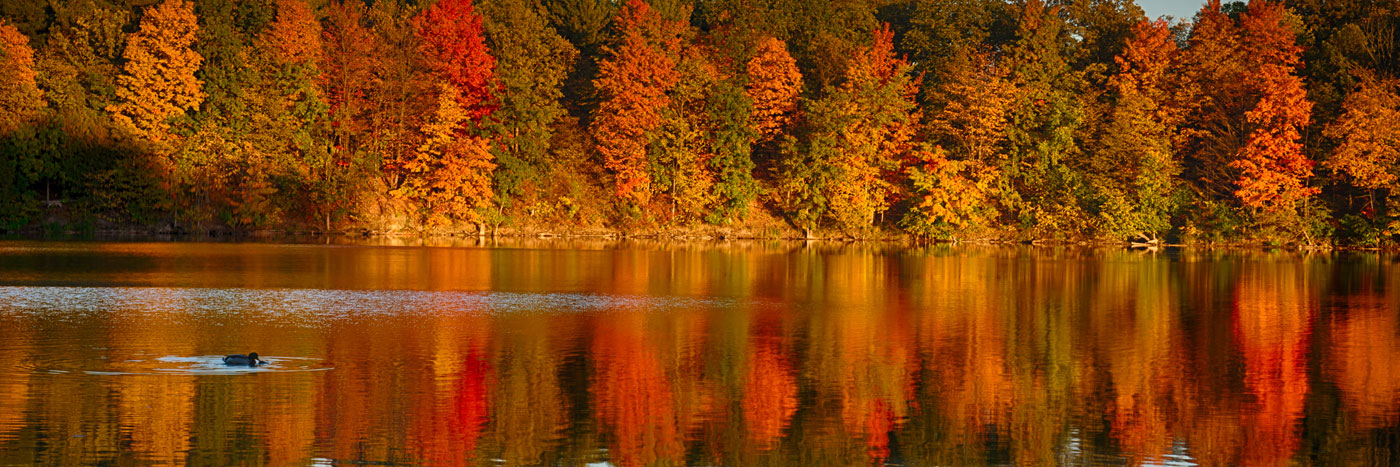 fall foliage in milne dam conservation park