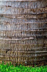 closeup of palm tree trunk
