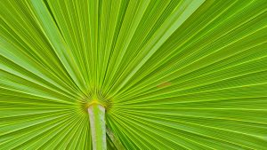close up of tropical plant leaves