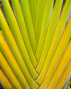 close up of tropical plant