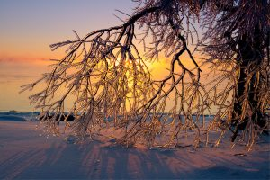 ice covered branches sunrise