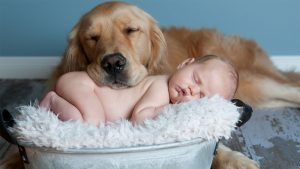 markham newborn baby and dog napping