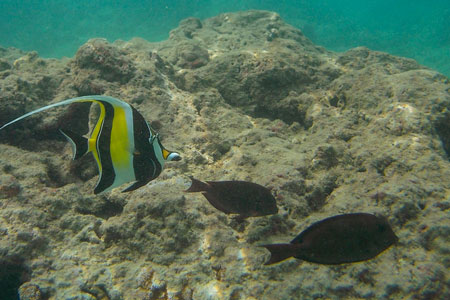 Hanauma Bay Fish 3