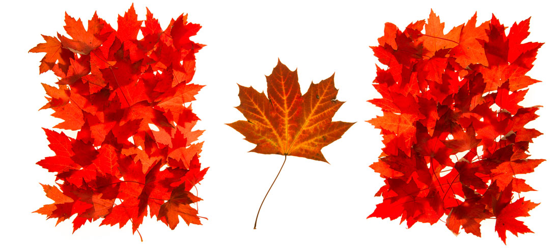 Canada 150 Maple Leaf Flag of Canada