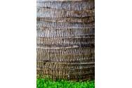 Palm Tree Trunk
