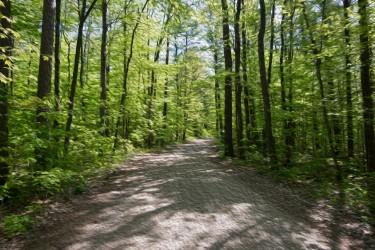 Treed Road
