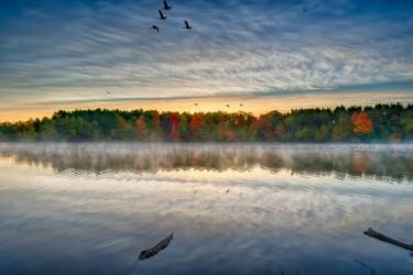 Fall Foliage on a Misty Morn