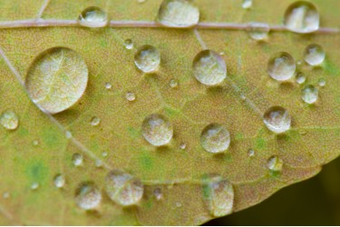 Rain Droplets on Leaf