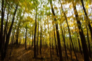 Blurry Trees in Fall