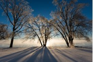 Winter Morning Delight