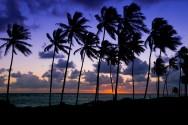 Palm Rise