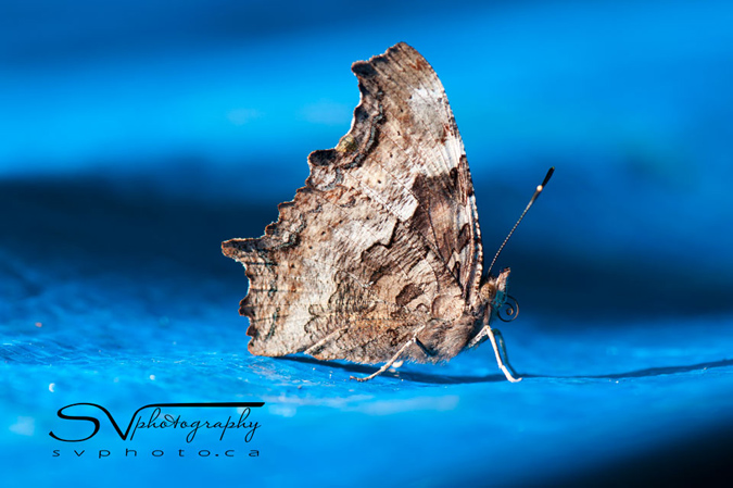 moth-on-tarp