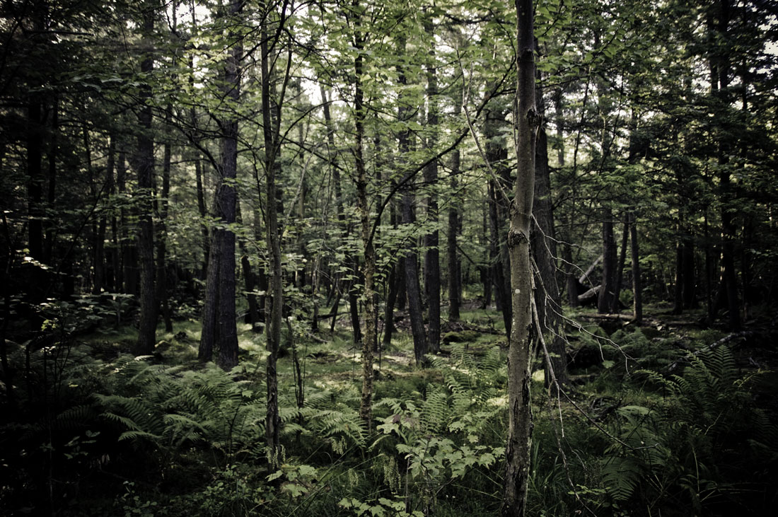 lush-vegetation-along-look-out-point-trail