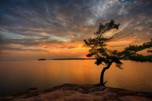 harold point wind swept pine killbear sunset landscape photography