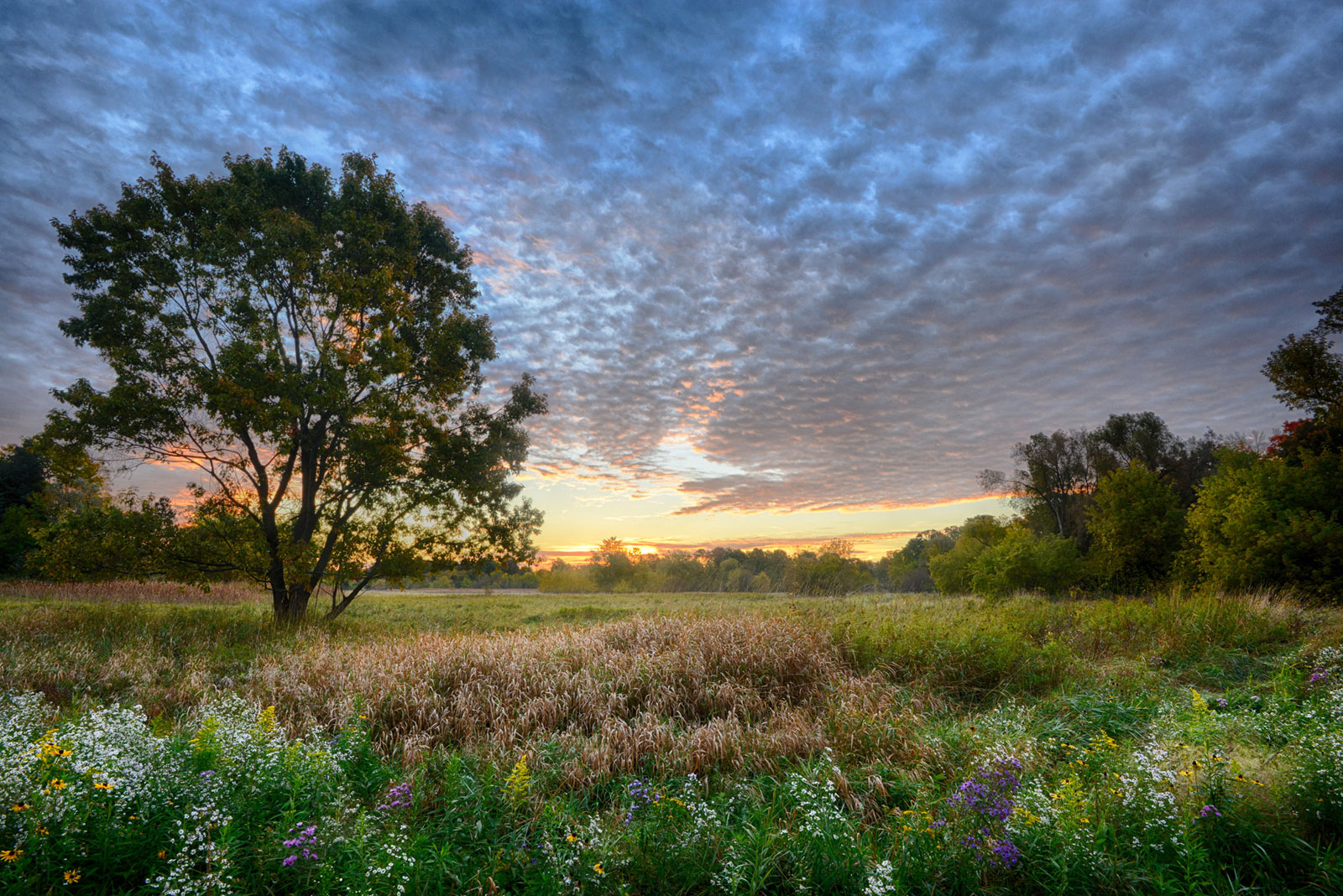wild flowers in bloom for one last time in fall landscape photography
