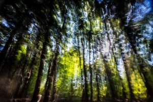 trees in a forest naturally blurred