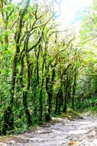impressionist image of cloud forest vegetation