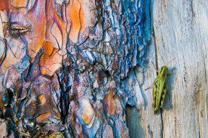 cricket on stump of tree