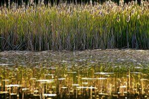 impressionist meadow