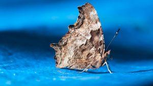 closeup of moth