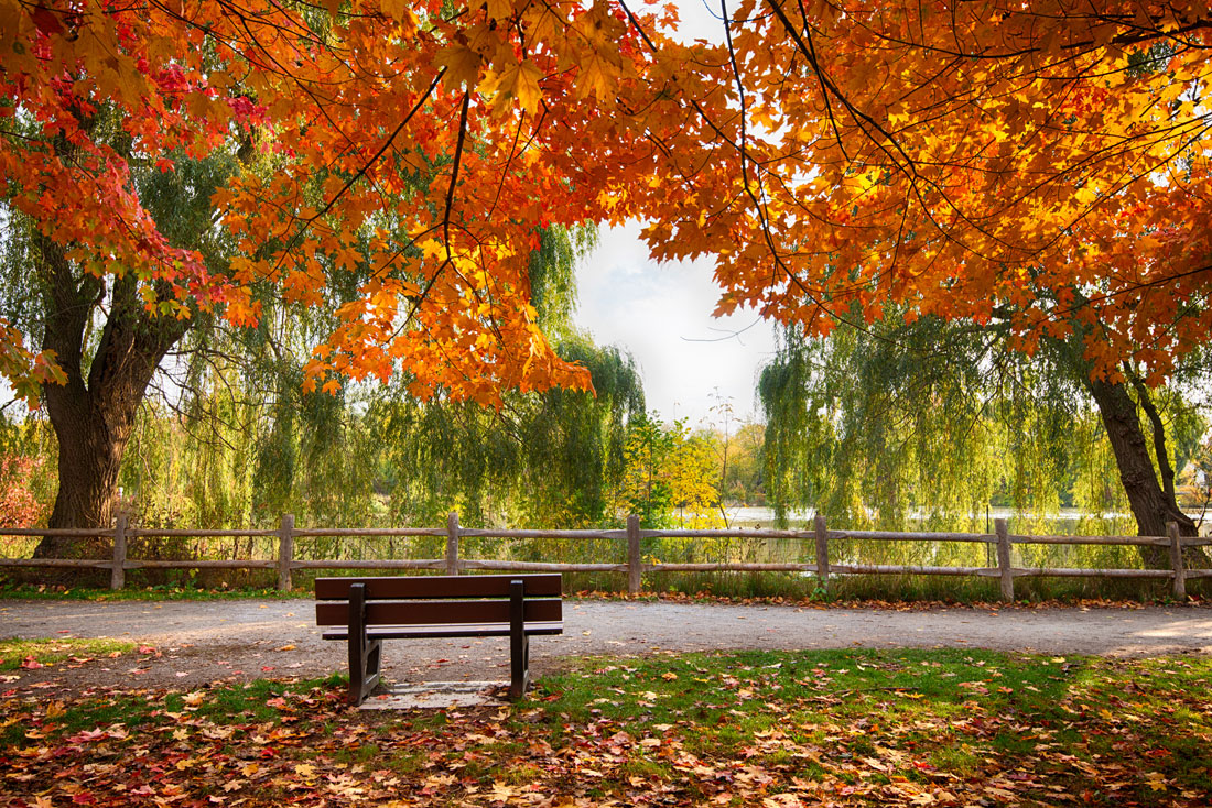 Bench-in-Toogood-Pond