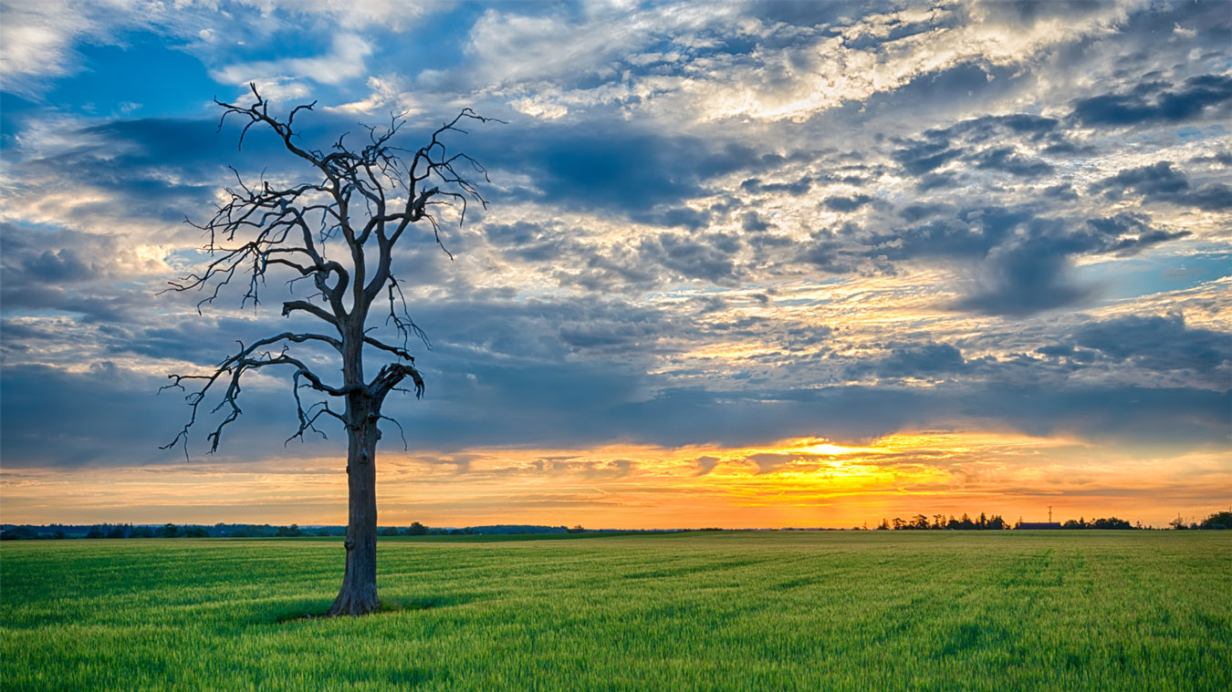 The Dead Tree and the Lush Green Field-Steven Vandervelde Photography